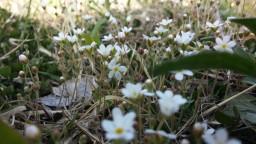 작은 것이 아름답다 | 봄꽃 풍경