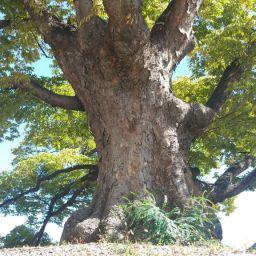 조개껍질 묶어 | 느티나무 아래에서