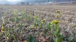 봄꽃 구경이 이리 힘들 줄이야 | 시골집 풍경
