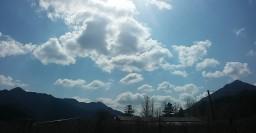 구름 강아지 | 꽃처럼 피었다 지는 구름꽃