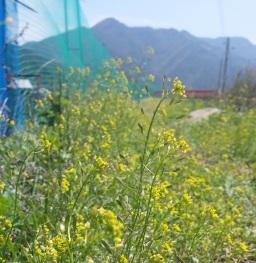 샛노란 봄산책길 | 동네한바퀴