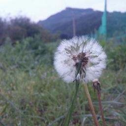 씨앗 속 생명의 세계 | 마당밭 풍경