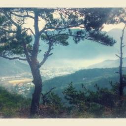 물 건너간 송이구경 | 호기심 천국의 버섯나라