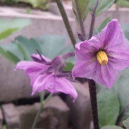 꽃은 맛있다 | 마당밭 꽃구경
