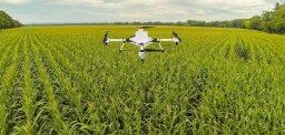 농업의 혁신이 빼앗아 가는 것들 | 아침 편지