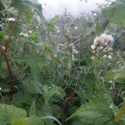 거미의 집짓기가 부러운 아침 | 아침 풍경
