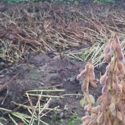 마당밭 아침풍경|콩세알의 지혜가 보인다