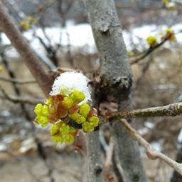 봄눈 오는 날 | 그래도 봄은 온다