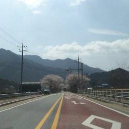 꽃비 내리는 봄날 | 사람 사는 풍경이 아름답다