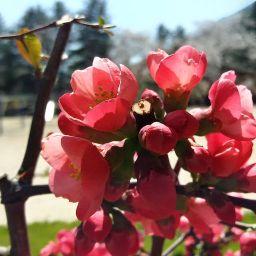 봄날 풍경 하나 | 봄꽃 잔치