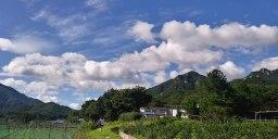구름 애벌레 꾸물꾸물 | 비갠후 아침풍경