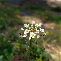 풀꽃 산책 | 문장대 야영장 산책로