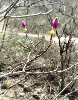 봄꽃 산책길 | 봄날 오후 풍경