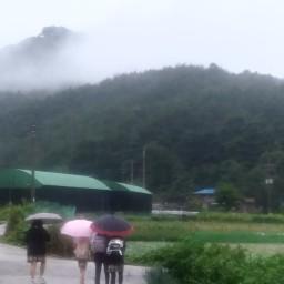 송이버섯이 있으니 산에 가는 | 백로, 송이시즌의 시작