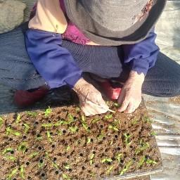 한 해 동네농사 시작하는 날 | 고추 모종 작업