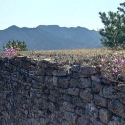 진달래 꽃길 | 견훤산성 산행산책길